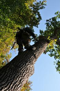 stoupání do koruny stromu